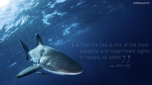 World Ocean's Day shark