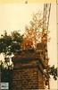 Haus Orr 1986 - 81