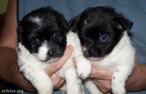 Filhotes de cachorros 46