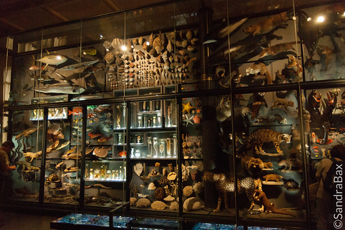 Wall of embalmed animals
