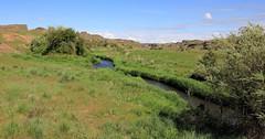 Rock Creek, Eastern Washington (fly flipper) Tags: snakes rocklake ticks easternwashington escureranch washingtonscablands