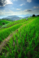 Rice Terraces in Northern of Thailand (SkyEyes Photographys) Tags: sky cloud mountain plant green nature field rural landscape thailand asia rice paddy farm harvest culture hut area chiangmai agriculture curve riceterrace
