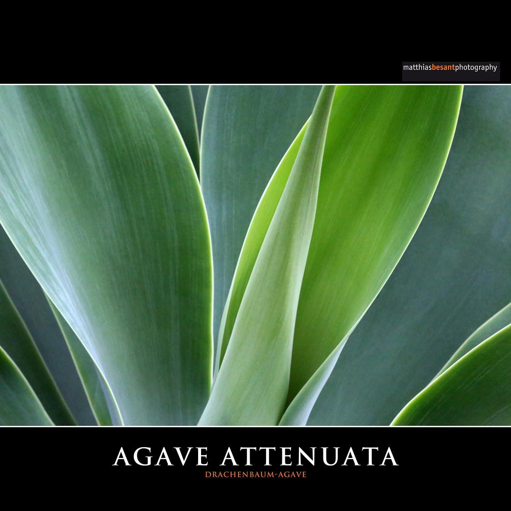 The World's Best Photos of agave and sukkulente Flickr Hive Mind ~ 01163053_Unterschied Sukkulente Xerophyten