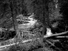 Grand Teton National Park, Wyoming, 2013 (matt-artz) Tags: blackandwhite wyoming tetons grandtetonnationalpark
