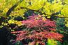Spectrum (Howard L.) Tags: autumn canon foliage howd oaklandlake oaklandgardens 100mmf28lmacro 5dmiii howardlaudesign