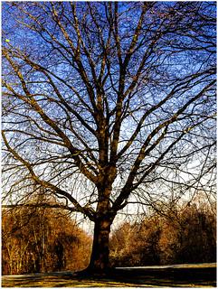 Winter-Sonnen-Tag