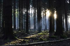 _DSC7555 doppelte Sonne im Wald - double sun in the forest (baerli08ww) Tags: winter light sun forest germany deutschland licht nikon natur shade sonne wald schatten rheinlandpfalz morgensonne westerwald rhinelandpalatinate