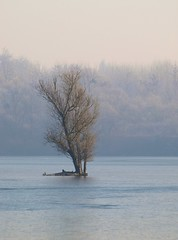 Arbre solitaire **--* (Titole) Tags: mist lake tree brume étang favescontestwinner thechallengefactory friendlychallengessweep titole nicolefaton