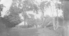 Banana Island, Sierra Leone (West Africa) 1905 (gbaku) Tags: pictures africa trees houses roof west history wall architecture island islands town photo village photos antique african picture banana villages case sierra architectural historic huts roofs photographs sierraleone photograph westafrica tropical vegetation afrika historical thatch walls anthropologie towns leone anthropology cases africain afrique ethnography geschichte ethnology africaine westafrican ethnologie classicblackwhite afrikas