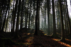 Sonnenstrahlen (Aah-Yeah) Tags: sunlight tree sunshine fog bayern nebel foggy sunrays sonne wald sunbeam sonnenstrahlen sunbeams sonnenschein achental chiemgau lichtblick