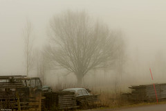 Dimma / Mist (Sigtuna_Nym) Tags: mist fog canon countryside sweden dimma skir