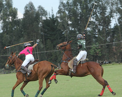 polo (rdlt) Tags: horses horse sports sport caballos photography play photos action best deporte match players polo equine mallets jugadores
