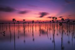 Untitled (Sandro Bisaro) Tags: longexposure sunset sea sky reflection water clouds canon landscape thailand lowlight asia wasser scenic kohphangan landschaft canon1740mmf4lusm kophangan เกาะพะงัน ประเทศไท canon5dmarkiii