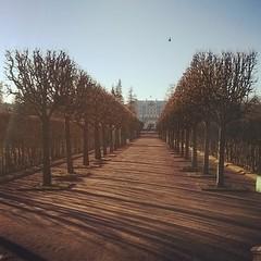 #trees #sun #spring #shadow #saintpetersburg #pushkin #tsarskoyeselo