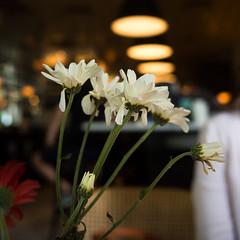P3290524-1-srgb-r (chai_shun_lai) Tags: street red white plant flower glass mall indonesia table lumix restaurant bottle gallery bokeh union decoration olympus pim jakarta gerbera 20mm indah pondok omd gastropub em5