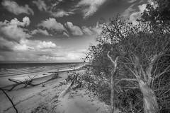 aspects of red beach 10 - the taking of the paperbark forest 2 (Fat Burns (gone bush)) Tags: ocean sea seascape beach landscape erosion eucalypt cloudyday beacherosion paperbarkforest melaleukatrees