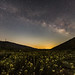 Milky Way Over the Anza-Borrego Desert Wildflowers 2017