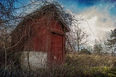 Derelict Shed on abandoned farm (circa 1800s) in NJ (dqpagan) Tags: trees fallautumn rotting rot abandonedhouse derelict decaying decay rural abandoned nj 1855 d5500 nikon