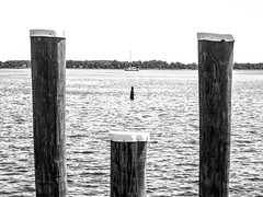 two times three (-gregg-) Tags: stmichaels water boat order post trees maryland bw