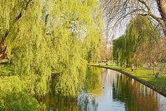 HDR Willow (Eugene Regis) Tags: london regentspark hdr hdrphotography