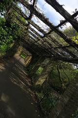 Ruskin Park pergola (Tom Doel) Tags: ruskinpark pergola london garden