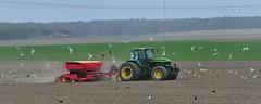 Spring sowing (nikkorglass) Tags: farmer bonden vårsådd springsown traktor tractor snowflakes damm gulls måsar kajor crows