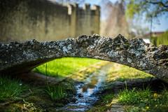 Little Bridge (ChrisTalentfrei) Tags: sony a7ii ilce7m2 fe50mm fe emount fullframe bokeh ff bokehlicious dof depth field burgkirche ingelheim bridge brücke pov alpha rheinlandpfalz