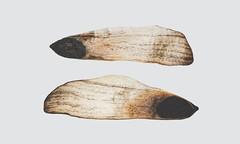 3048 (saul gm) Tags: macromondays seeds semillas hmm macro studio white whitebackground two pair pine pino detail closeup extremecloseup minimal mnml simplicity