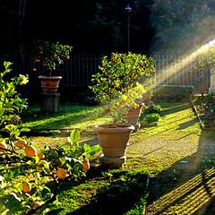 Agrumi di Villa Borghese, Roma (pom.angers) Tags: panasonicdmctz30 february 2017 hff roma rome villaborghese lazio italia italy europeanunion sunrays flare lemontree 100 150 200
