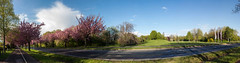 Holzweg im Jahr 2017 (diwan) Tags: germany deutschland sachsenanhalt saxonyanhalt magdeburg city stadt nordwest place holzweg street bäume trees nature natur bloom blüte zierkirsche cherry rosa pink outdoor roundabout equirectangular spivpano fotogruppe fotogruppemagdeburg panoramix panorama stitch ptgui canonefs1585mmf3556isusm canoneos650d canon eos 2017 geotagged geo:lon=11604196 geo:lat=52156048
