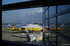 C-3PO ANA JET at HND (20170423) (HAMA-ANNEX) Tags: ana 東京 羽田空港 hnd airport airplane k1 carlzeisscosinaplanart14zk50mm reflection