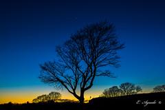 Venus and Tree (E. Aguedo) Tags: venus tree twilight sunset sky planet winter blue long exposure astrophotography new england rhode island warwick ngc