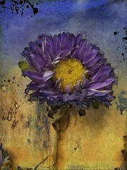 Spring Flower (jimlaskowicz) Tags: vintage painterly impressionistic dream surreal art textures spring flower ode