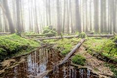 Buckwaria Wood (mickreynolds) Tags: 2017 buckwaria comayo ireland nx500 samyang12mm westport forest wood woodland woods