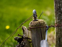 verdrahtet, verschraubt u genagelt (mohnblume2013) Tags: landschaft acker bauernland pfosten holz draht schrauben vernagelt metall