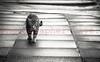 Top Cat. (Photographer Dave C) Tags: canon canon40d canonofficial creative photography photographerdave photograph passion cat 2017 people portrait photographer bangor blackwhite sepia stunning spring