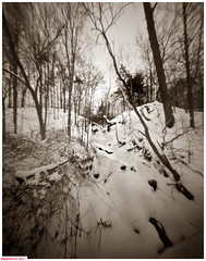 Side creek (DelioTO) Tags: 4x5 adoxchs100 autaut blackwhite d23 duotone february landscape natparks ontario pinhole rural toned trails winter woods