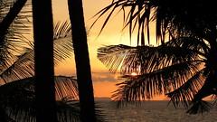Palm tree sunset (Daniel Bond) Tags: kolanta thailand palm sunset sky trees sea andamansea