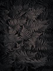 Deep in the Selenium Woods (gimmeocean) Tags: hss ferns bw blackandwhite iphoneography iphonenography iphone apple selenium miltonlakepark rahway newjersey nj sliderssunday