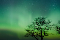 Northern_lights_with_shooting_star (divyatinnanuri) Tags: northern lights aurora dark sky stars dancing tree silhoutte dawn april spring stunning amazing upper peninsula michigan 2017 calumet shooting bright