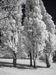 Mountsfield Park (blackwoodse6) Tags: infrared london england 720nm trees white blue canon canong10 outdoors southlondon southeastlondon mountsfieldpark londonparks catford bluesky