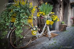 Bici in fiore (Antonio Casti) Tags: casty italy italia lazio canoneos5dmarkiii bicicletta viaggio nemi it