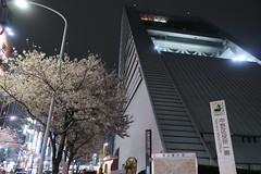 IMG_0547 (digitalbear) Tags: canon powershot g9x markii mark2 nakano dori sakura cherry blossom blooming fullbloom tokyo japan yozakura hanami