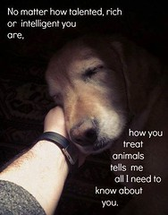 No Matter How Rich (dflmanagement) Tags: dog dogs pet animal
