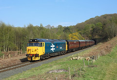 50049, Foley Park, 9 April 2017 (Mr Joseph Bloggs) Tags: 50 50049 svr severn valley railway kidderminster bewdley foley park hoover preserved english electric train treno railroad bahn
