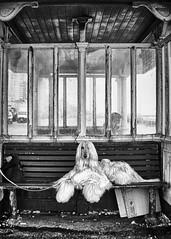 Posh Paws (Fourteenfoottiger) Tags: dog posh paws shelter mono monochrome blackandwhite candid pet grimy delapidated bench seat sitting resting windows glass seafront promenade hound afghanhound