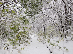 IMG_2825 (sjj62) Tags: s90 snow snowscape lith lakeinthehillsil winter winterscape