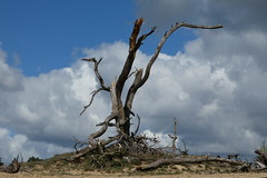 leftover (polletjes) Tags: abandoned boom bomen tree trees arbre arbres baume wolken cloud clouds wolk blue white wit blauw sky lucht hemel natuur nature nederland netherlands landschap landscape