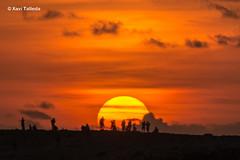 sol ponent (xavi talleda) Tags: balears formentera illesbalears calasaona sun sol setting puesta posta ocaso siluetas silhouettes