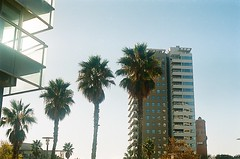 16420022 (paulasangu) Tags: palmtrees sky architecture barcelona bcn city urban urbanphotography analog analogue analogphotography analogica fim filmphotography 50mm